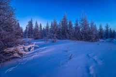 Winter landscape with forest, cloudy sky and sun. Winter landscape with forest, cloudy sky, trees, snow and sun. Pink and violet tone Royalty Free Stock Images