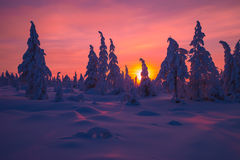 Winter landscape with forest, cloudy sky and sun. Winter landscape with forest, cloudy sky, trees, snow and sun. Pink and violet tone Royalty Free Stock Photo