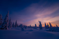 Winter landscape with forest, cloudy sky and sun. Winter landscape with forest, cloudy sky, trees, snow and sun. Pink and violet tone Royalty Free Stock Photography