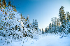 Winter landscape with the forest Stock Photos