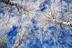 Winter landscape with the forest covered with snow Stock Photos