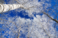 Winter landscape with the forest covered with snow Stock Photo