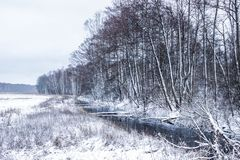 Winter landscape: forest and forest in the snow royalty free stock photography