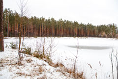 Winter landscape of forest frozen lake Royalty Free Stock Photos