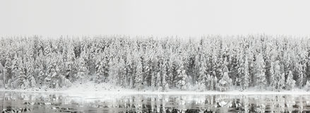 Winter landscape. Forest panorama with reflection in the river. Northern winter landscape. Panorama of the forest with reflection in the river Stock Photo