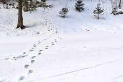 Winter landscape of a forest park and traces on snow Stock Photo