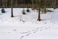 Winter landscape of a forest park and traces on snow Stock Image