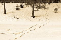 Winter landscape of a forest park and traces on snow Stock Photography