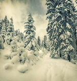 Winter landscape in the forest. Royalty Free Stock Photo