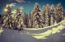 Winter landscape in the forest. Retro stile Royalty Free Stock Photography