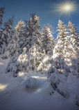 Winter landscape in the forest. Stock Photos