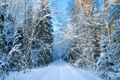 Winter landscape with the forest and the road Stock Photo