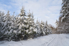 Winter landscape in the forest with skiway Stock Photos