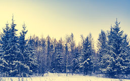 Winter landscape forest Royalty Free Stock Photos