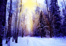 Winter landscape forest in snow frost Stock Photography