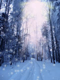Winter landscape forest in snow frost Royalty Free Stock Image
