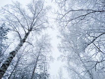 Winter landscape forest in snow frost Royalty Free Stock Photos