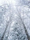 Winter landscape forest in snow frost Royalty Free Stock Photography