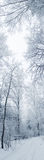 Winter landscape forest in snow frost Stock Photo