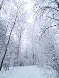 Winter landscape forest in snow frost Stock Photos