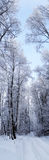 Winter landscape forest in snow frost panorama Stock Photo