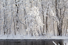 Winter landscape forest snow river water Royalty Free Stock Photos