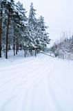 Winter landscape in the forest Stock Photography