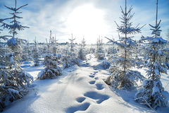 Winter landscape with the forest  and the sun Stock Photography