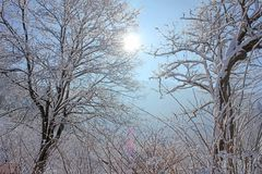 Winter Landscape in The Forest and The Sun royalty free stock images