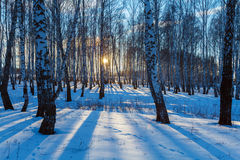 Winter Landscape with Forest at Sunset Stock Photos