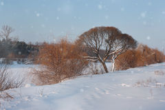 Winter landscape with forest and trees on the riverside Royalty Free Stock Image