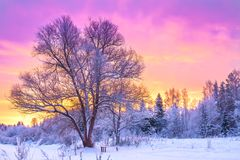 Winter landscape with forest, trees and sunrise Royalty Free Stock Images