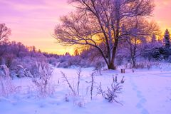 Winter landscape with forest, trees and sunrise. Beautiful winter landscape with forest, trees and sunrise. winterly morning of a new day. purple winter Royalty Free Stock Photos