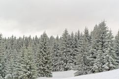 Winter landscape of forested mountains in Harz region, Germany. This photo was taken from Sonnenberg ski piste stock photography