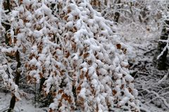 Winter landscape. Fresh snow on the branches of trees in the winter forest. Fresh snow on the branches of trees in the winter forest stock photos