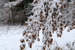 Winter landscape. Fresh snow on the branches of trees in the winter forest. Fresh snow on the branches of trees in the winter forest stock photography