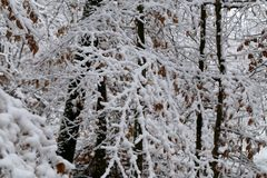 Winter landscape. Fresh snow on the branches of trees in the winter forest. Fresh snow on the branches of trees in the winter forest stock image