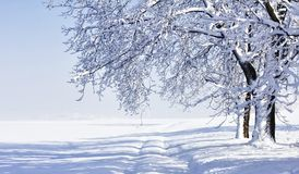 Winter landscape with fresh snow. Royalty Free Stock Image