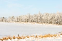 Winter Landscape With Fresh Snow Covered Trees. Beautiful winter morning landscape in the country with fresh snow covered trees. Field protected by poplar Royalty Free Stock Image