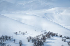 Winter landscape. Fresh snow Stock Images