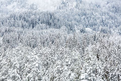 Winter landscape froest Stock Image