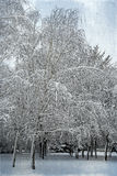 Winter landscape frost on birch trees and snow falling in city p Stock Photos