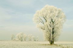 Winter landscape, frost covered tree Stock Image