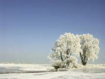 Winter landscape, frost covered trees. Frozen trees on a meadow with natural blue sky. White winter frost on a crown shining in the morning sunlight, pure snowy Stock Photos