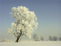 Winter landscape frost covered trees Royalty Free Stock Image