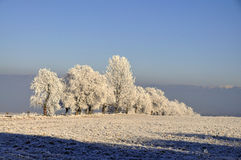 Winter landscape, frost covered trees Stock Images