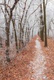 Winter landscape frost oaks in frosty morning Stock Images