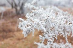 Winter landscape frost oaks in frosty morning Royalty Free Stock Photos
