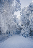 Winter landscape with frost and snow covered trees and nature of Carpathian mountains near Bratislava,Slovakia Stock Photography