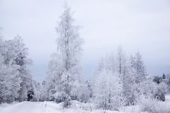 Winter landscape. With frost on trees Royalty Free Stock Photography